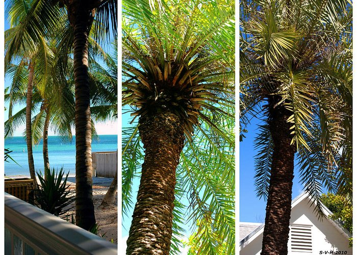 Palm Triplets Greeting Card featuring the photograph Key West Palm Triplets by Susanne Van Hulst