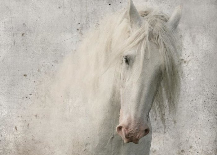 White Horse Greeting Card featuring the photograph Kindness by Dorota Kudyba