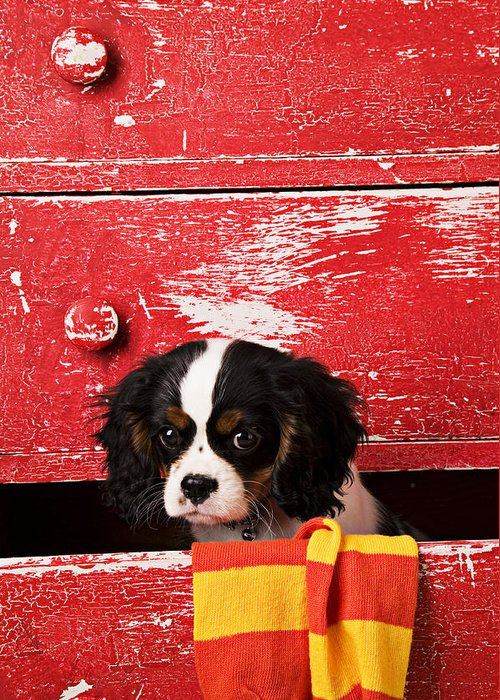 Puppy Greeting Card featuring the photograph King Charles Cavalier Puppy by Garry Gay
