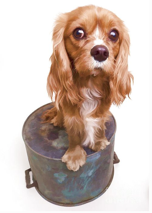 Dog Greeting Card featuring the photograph King Charles Spaniel Puppy by Edward Fielding