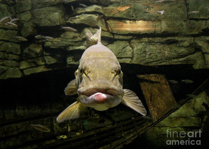 Fish Greeting Card featuring the photograph Kiss Me You Fool by Donna Brown