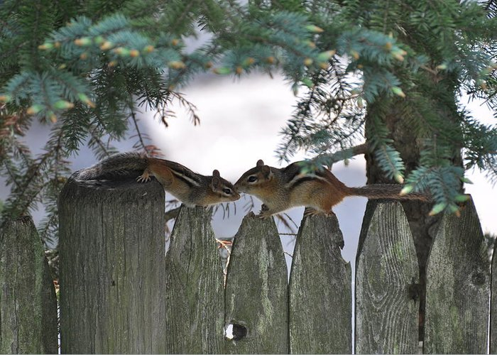 Kissing Greeting Card featuring the photograph Kissing On A Fence by Jo-Ann Matthews