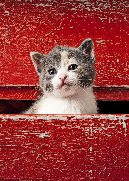 Kitten Greeting Card featuring the photograph Kitten In Red Drawer by Garry Gay