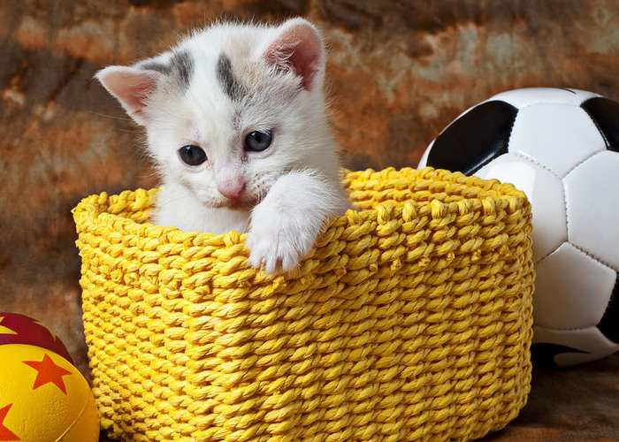 Kitten Greeting Card featuring the photograph Kitten In Yellow Basket by Garry Gay