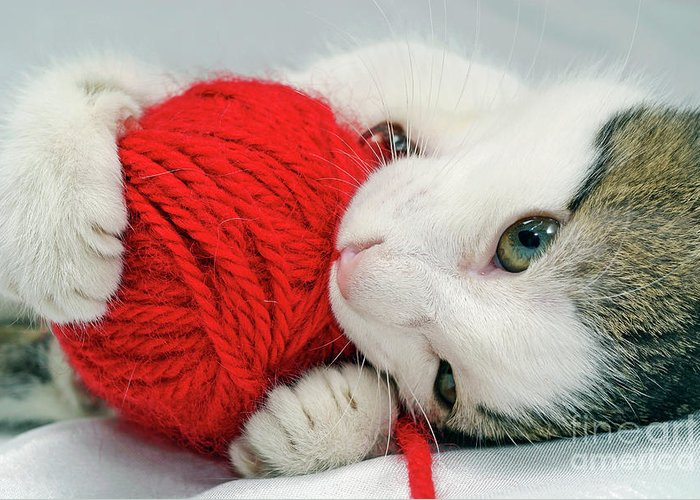 Innocence Greeting Card featuring the photograph Kitten Playing With Red Ball Of Yarn by Sami Sarkis