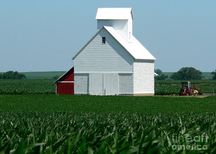 Farm Greeting Card featuring the photograph Knee High By The Fourth Of July by David Bearden