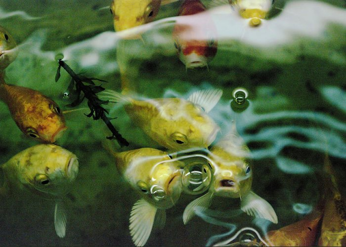 Fish Greeting Card featuring the photograph Koi by Jeff Swan