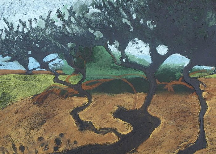 Contemporary Tree Landscape Greeting Card featuring the drawing La Jolla I by Leah Tomaino
