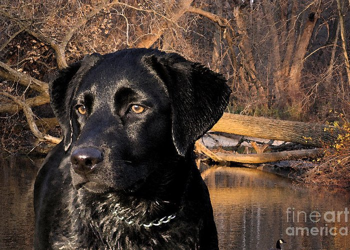 Black Greeting Card featuring the photograph Labrador Retriever by Cathy Beharriell