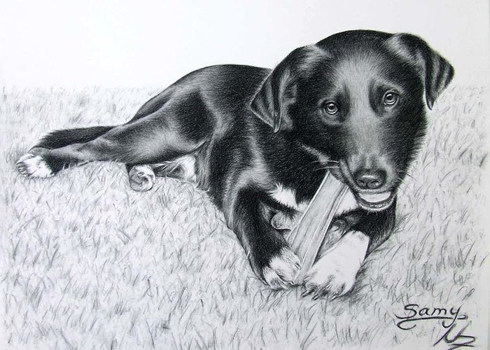 Dog Greeting Card featuring the drawing Labrador Samy by Nicole Zeug