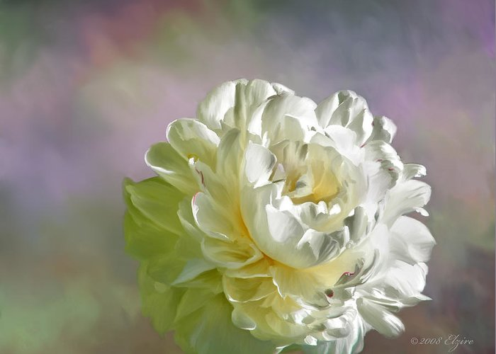 White Peony Greeting Card featuring the painting Lacy by Elzire S