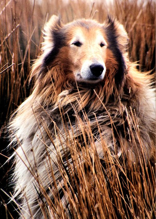 Dog Greeting Card featuring the photograph Laddie In Charge by Ellen Lerner ODonnell