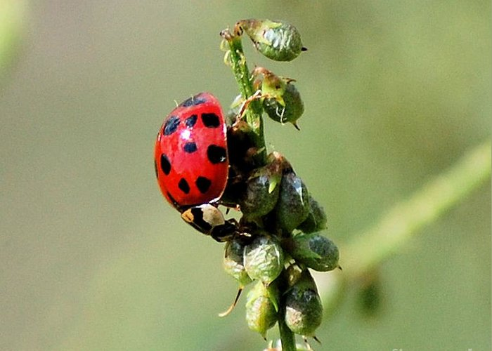Landscape Greeting Card featuring the photograph Lady Beetle by David Lane