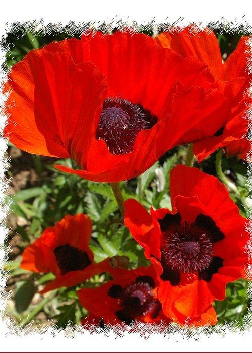 Garden Greeting Card featuring the photograph Ladybird Poppy by Veron Miller