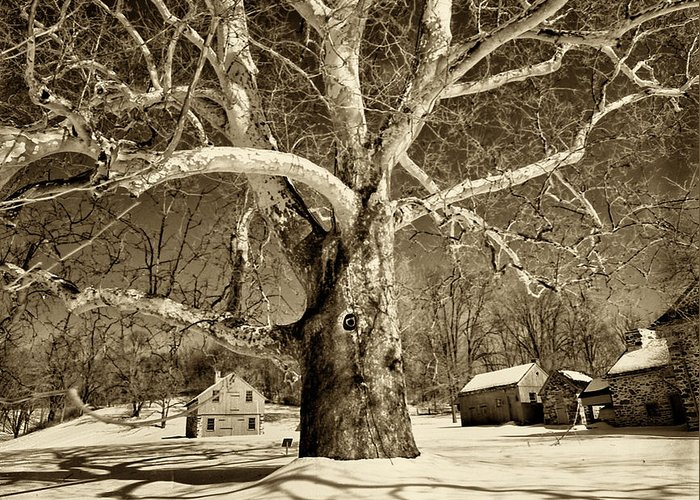 Sycamore Tree Greeting Card featuring the photograph Lafayette Headquarters by Jack Paolini