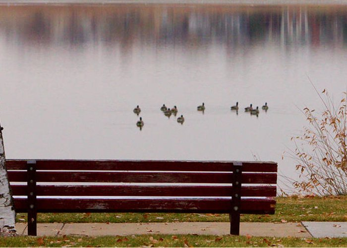 Aspen Greeting Card featuring the photograph Lake Bench by James BO Insogna