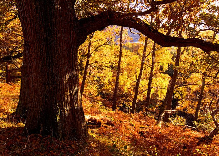 Aira Force Greeting Card featuring the photograph Lake District - Fall Colors Near Aira Force by Dave Lawrance