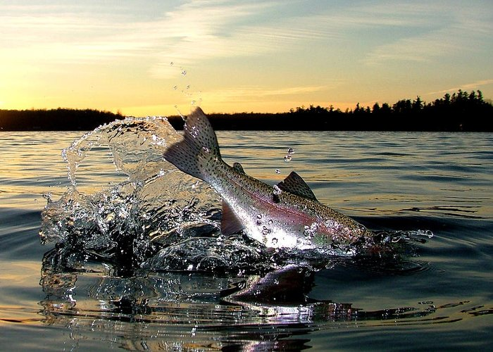 Rainbow Trout Greeting Card featuring the photograph Lake Memories by Brian Pelkey