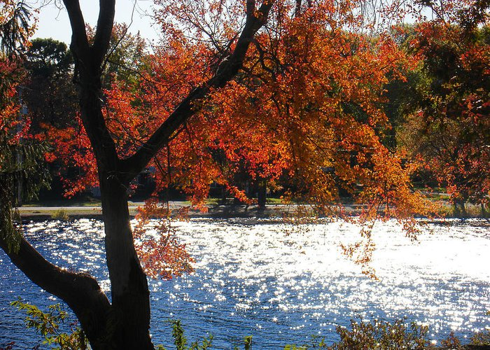 Landscape Greeting Card featuring the photograph Lakewood by Steve Karol