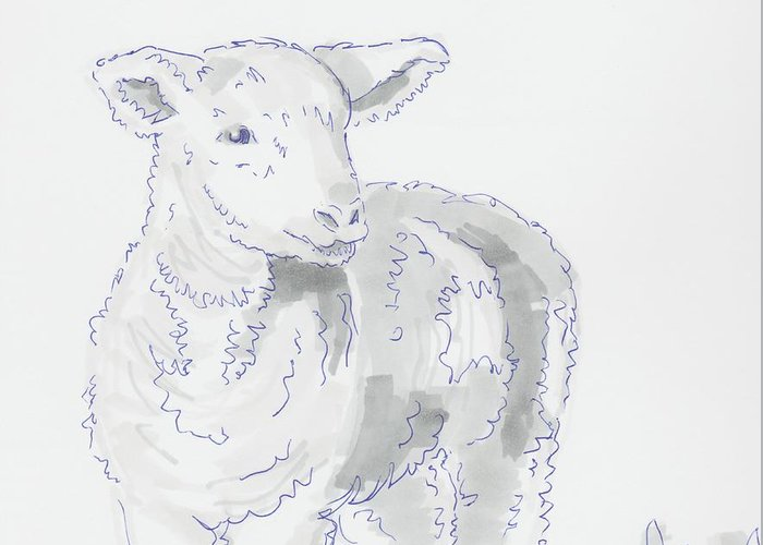 Lamb Drawing Using Marker Pen Greeting Card For Sale By Mike Jory
