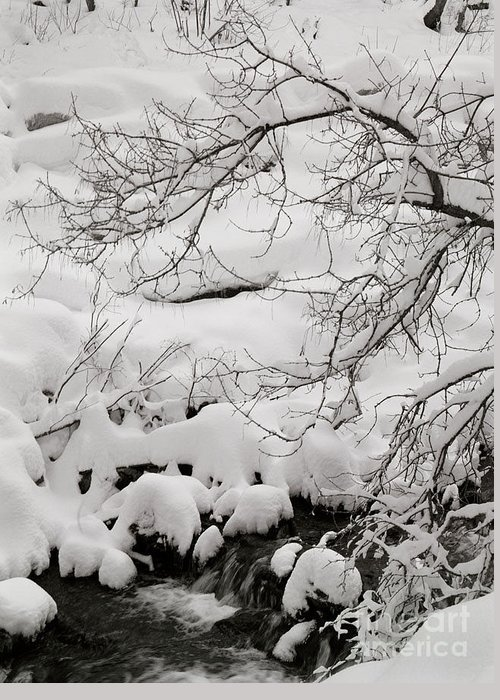 Utah Greeting Card featuring the photograph Lambs Canyon in Winter by Dennis Hammer