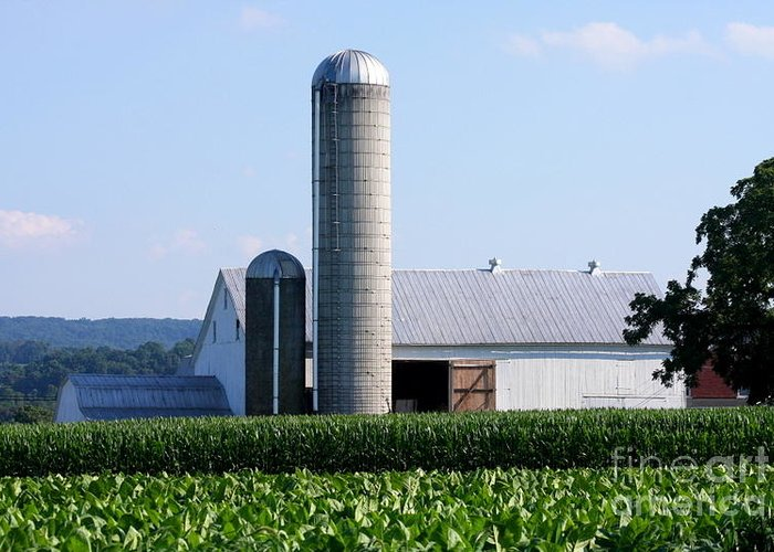 This Is A Photo Of A Lancaster Farm In Lancaster Pennsylvania. Greeting Card featuring the photograph Lancaster Farm by William Rogers
