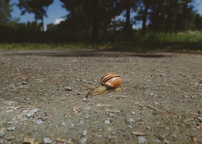 Dusk Greeting Card featuring the photograph Landscape Of The Snail by Asbed Iskedjian