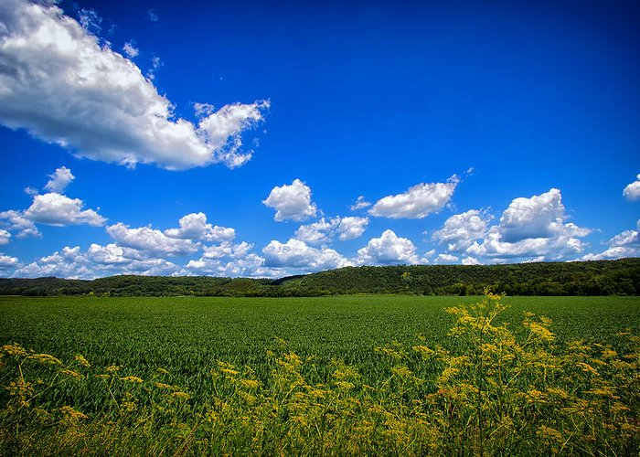 Field Greeting Card featuring the photograph Lanesboro Fields by Bill Tiepelman