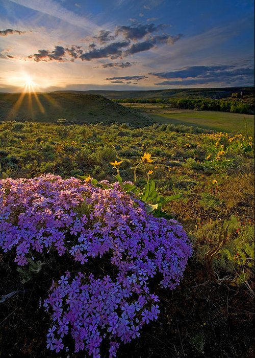 Wildflowers Greeting Card featuring the photograph Last Light Of Spring by Mike Dawson