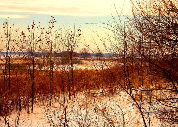 Winter Greeting Card featuring the photograph Late Winter at Emiquon by Helen ONeal