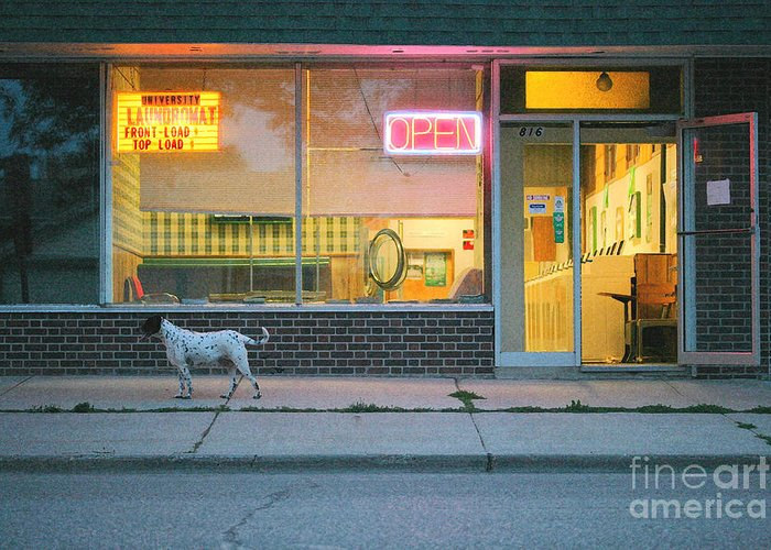 Dog Greeting Card featuring the photograph Laundromat Open by Steve Augustin