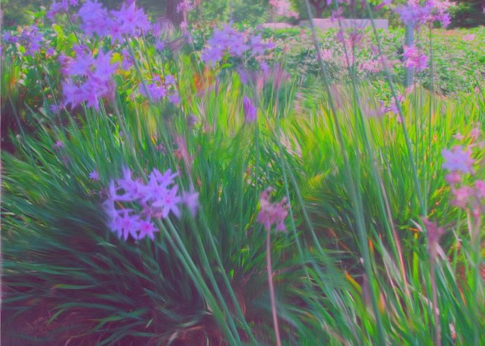 Flowers Greeting Card featuring the painting Lavender Field by Maribel McIntosh