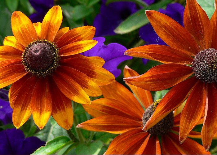 Flowers Greeting Card featuring the photograph Layers Of Color by Larry Keahey