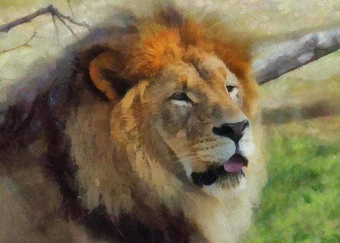 Male Lion Greeting Card featuring the photograph Lazy Afternoon by Judy Coggin