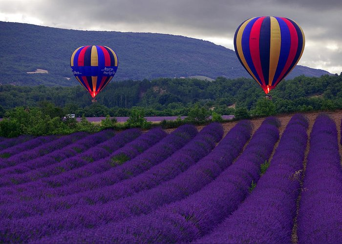 Lavender Fields Greeting Card featuring the photograph Le Matin by John Galbo
