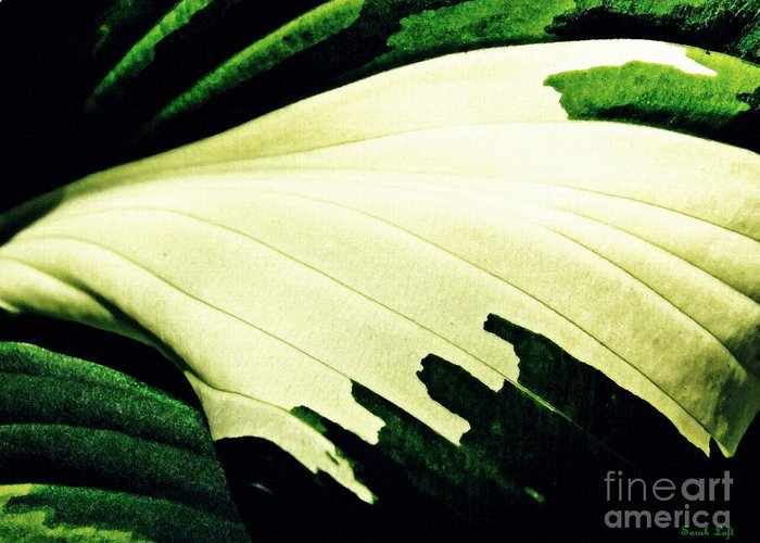 Leaf Greeting Card featuring the photograph Leaf Abstract 7 by Sarah Loft