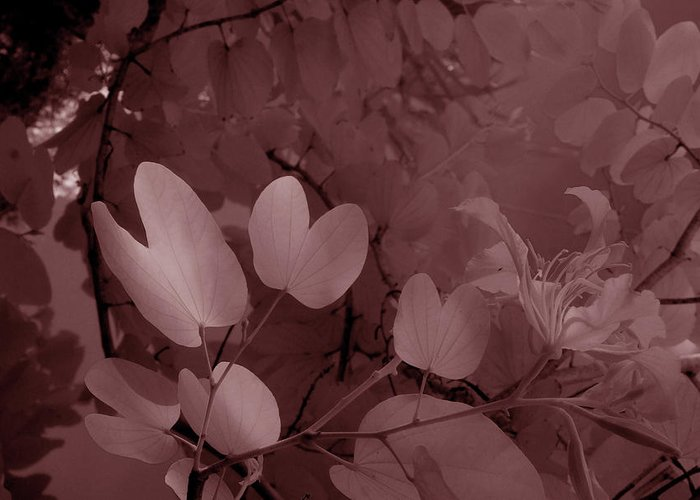 Trees Greeting Card featuring the photograph Leaf And Flower 2 by Gary Bartoloni