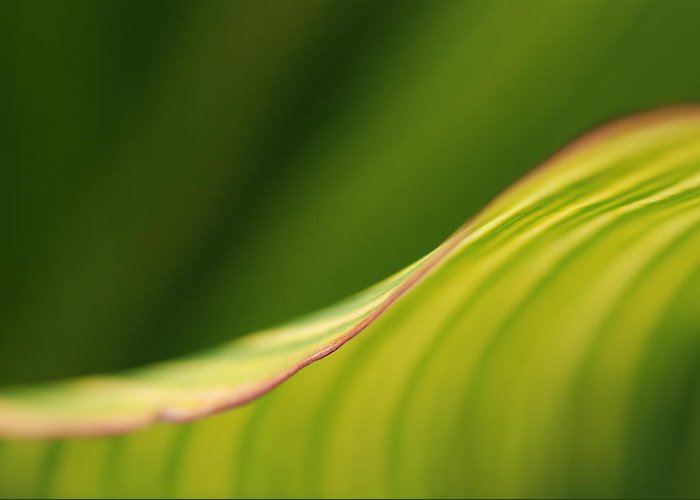 Macro Greeting Card featuring the photograph Leaf by Catherine Lau
