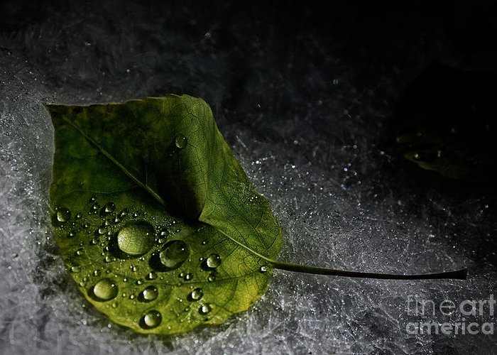 Cinematic Greeting Card featuring the photograph Leaf Droplets by Brad Allen Fine Art