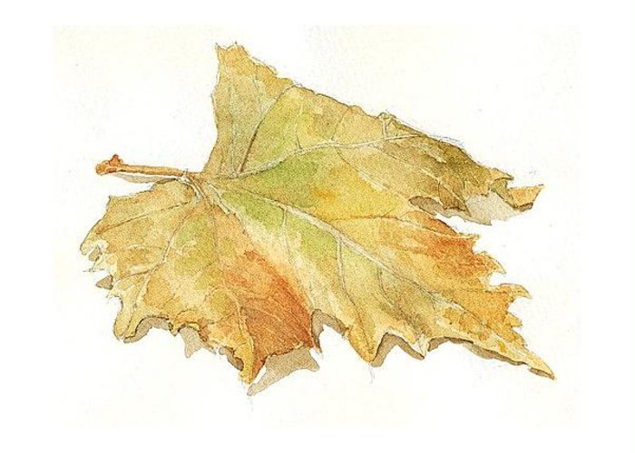 Still Life Greeting Card featuring the painting Leaf by Jose Carvalhosa