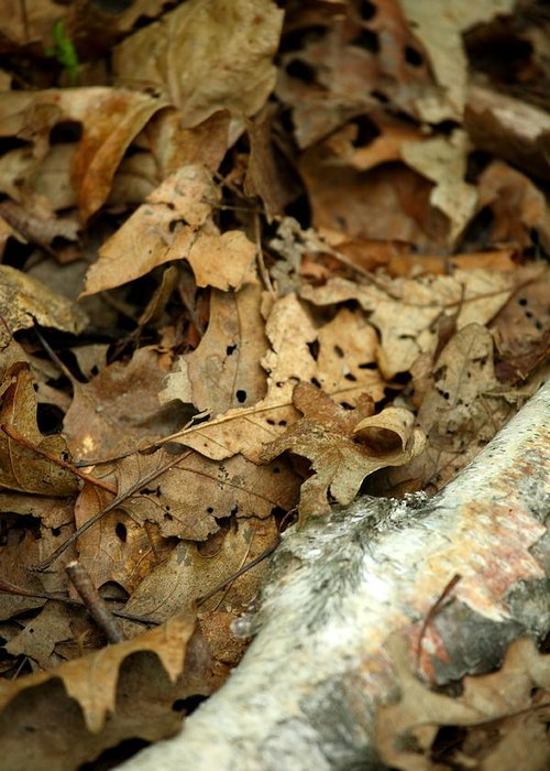 Leaf Greeting Card featuring the photograph Leaf Litter by Mark Platt