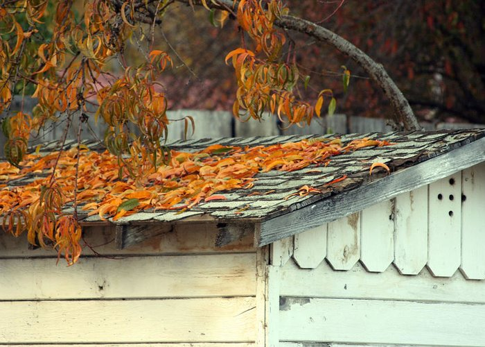 Season Greeting Card featuring the photograph Leaf Shed by Holly Ethan