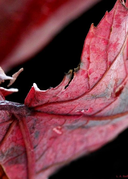 Macro Greeting Card featuring the photograph Leaf Study I by Lauren Radke