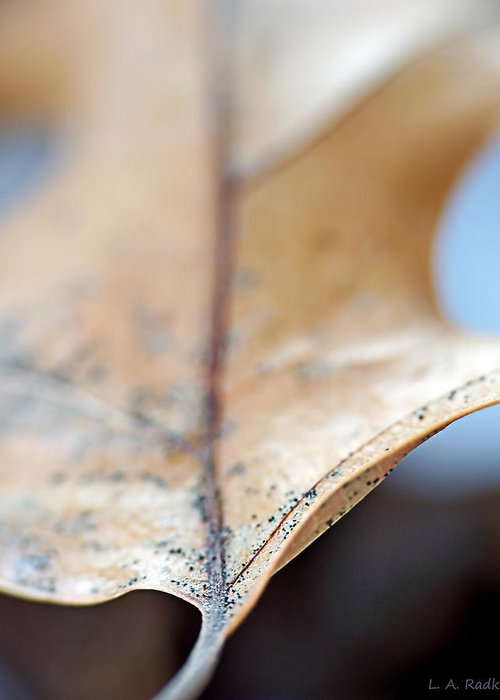 Abstract Greeting Card featuring the photograph Leaf Study Vii by Lauren Radke