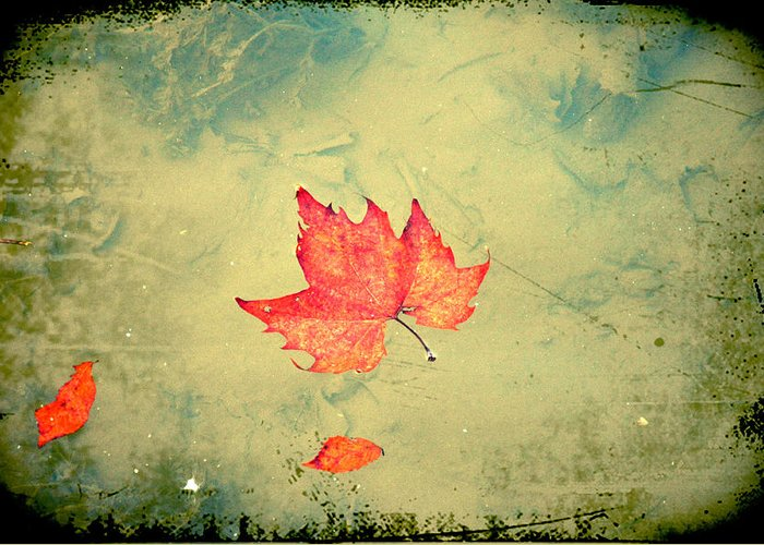 Leaf Greeting Card featuring the photograph Leaf Upon The Water by Bill Cannon