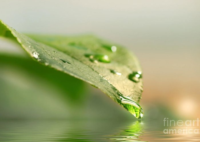 Background Greeting Card featuring the photograph Leaf With Water Droplets by Sandra Cunningham