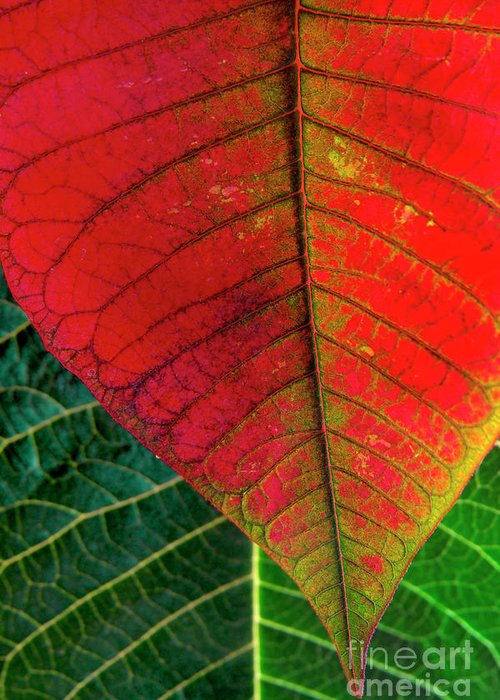 Autumn Greeting Card featuring the photograph Leafs Macro by Carlos Caetano