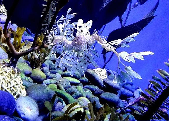 Leafy Sea Dragon Greeting Card featuring the photograph Leafy Sea Dragon by Kelly Mills
