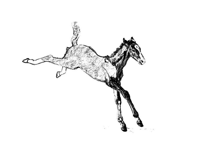 Horse Greeting Card featuring the photograph Leaping Foal by JAMART Photography