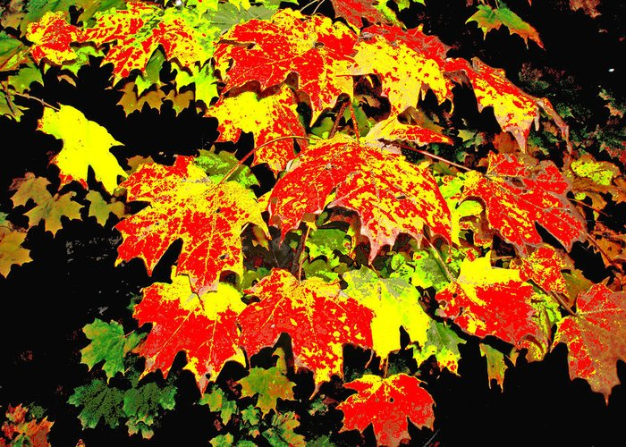 Leaves Greeting Card featuring the photograph Leave Me Be by Dianne Patten